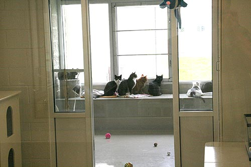 Cat Community Room